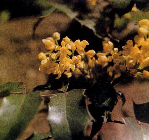 Растения тенистый сад цветник в тени