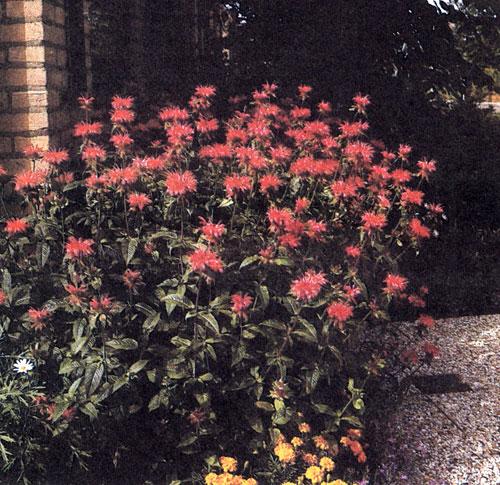 Цветы бордюрные на даче