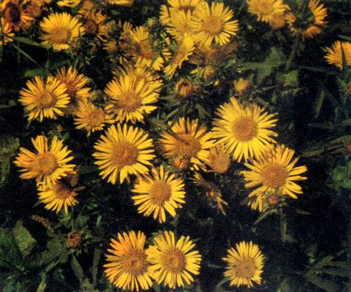 Цветы растущие на солнцепеке