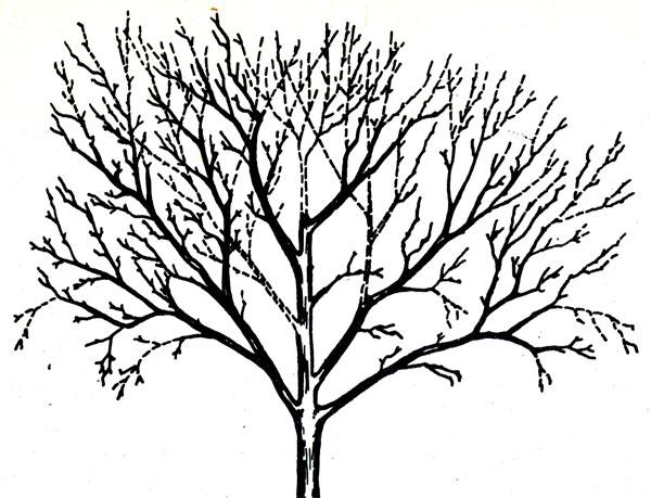Рисуем и раскрашиваем деревья и плоды