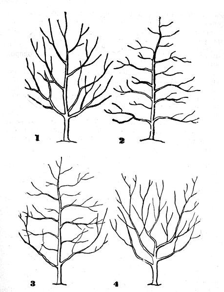 Схемы разных типов